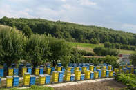 Hives On our Farm